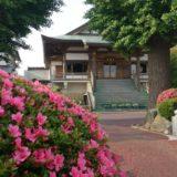 本覚寺境内のツツジと紫陽花