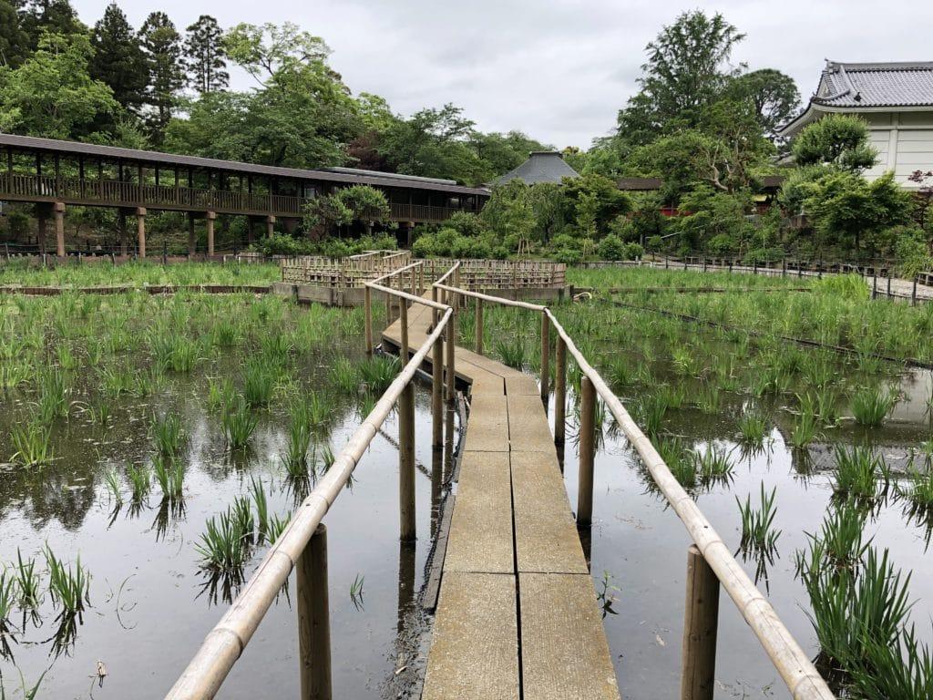 本土寺 菖蒲池