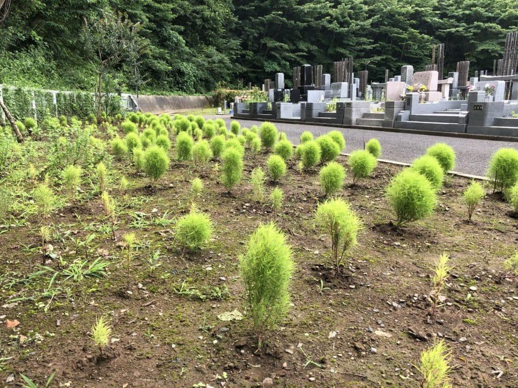 松戸中央霊園 コキア