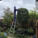 植木の剪定(本覚寺中庭)