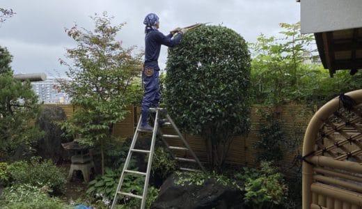 植木の剪定とチャドクガ