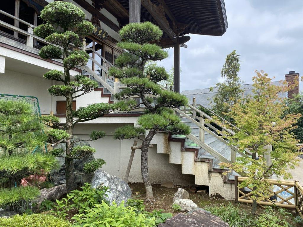 植木の剪定(本覚寺)