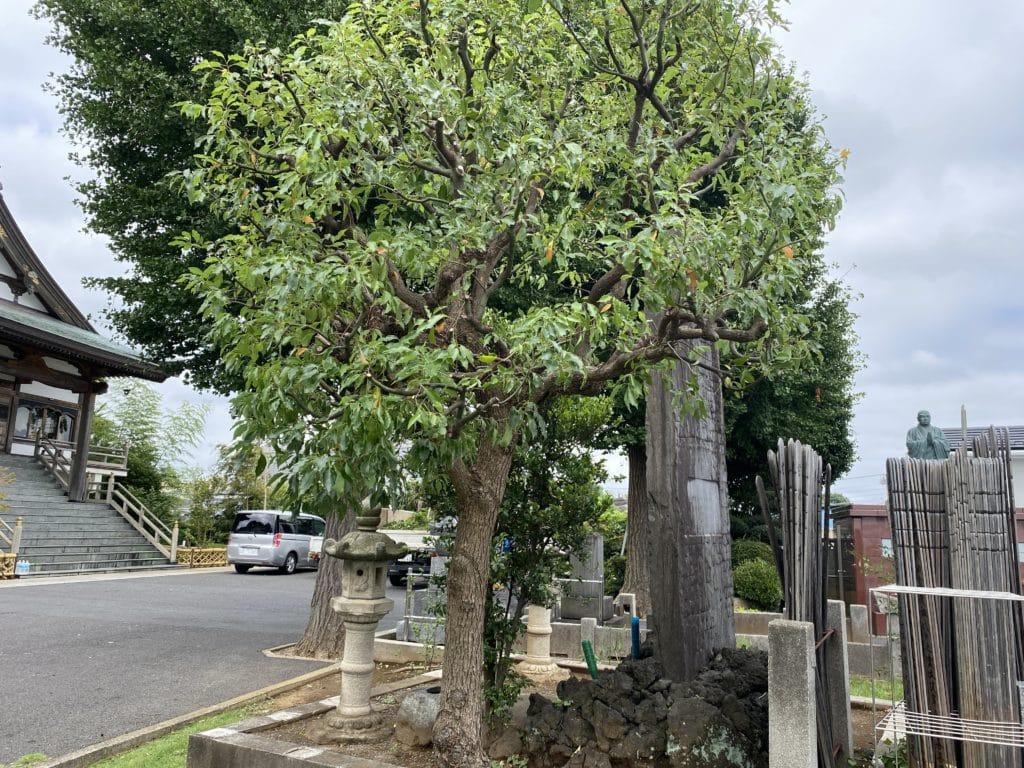 植木の剪定(参道)